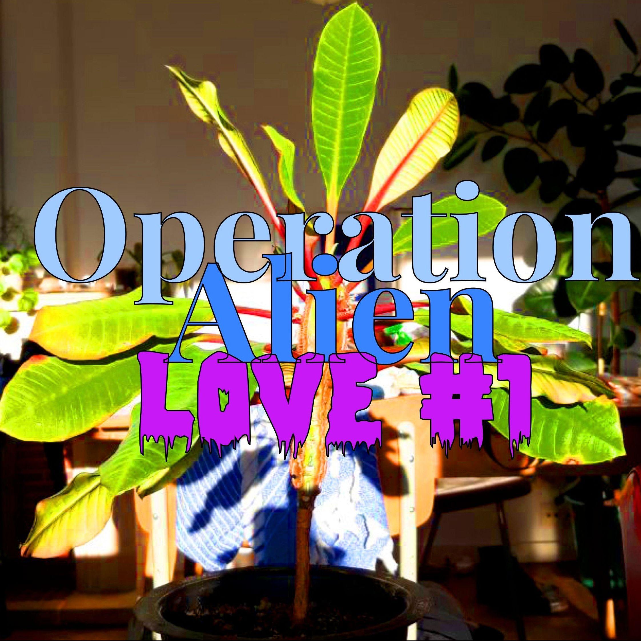 """In der Mitte des Bildes ist eine Pflanze im Hintergrund, die in einem Zimmer steht. Darüber steht """"Operation Alien Love #1"""" ."""